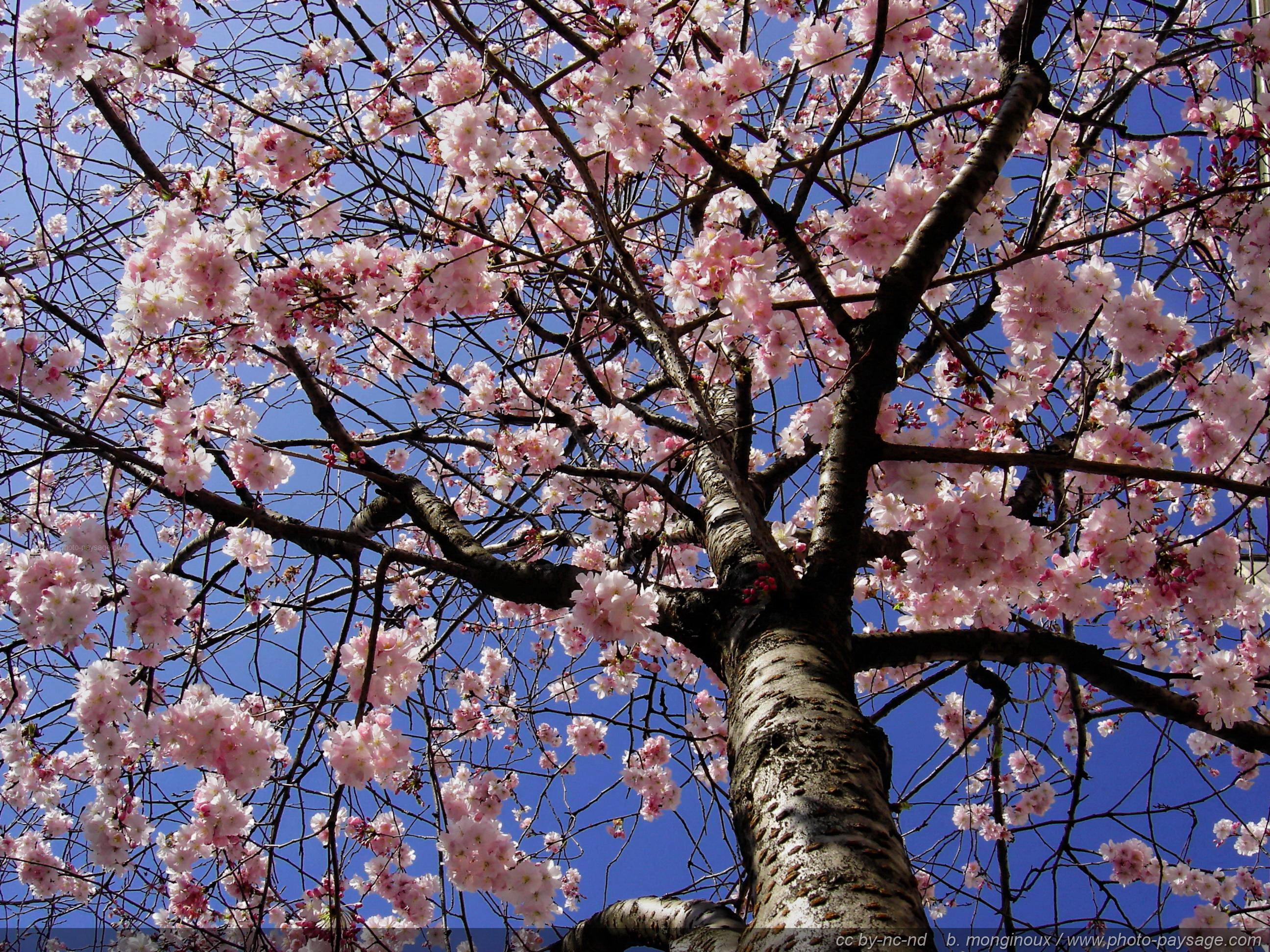 Les parutions d'avril, fêtons le printemps |